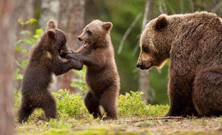 bearsfeatured