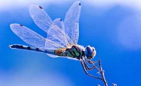 dragonflyfeature
