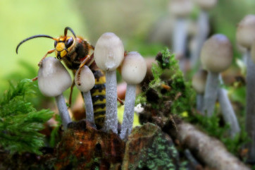 Mum look at these cute Mushrooms....arghhhhhhhhh MUM!!! by Yvonne Davidson