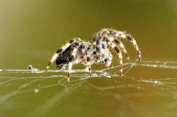 What a wicked web we weave by William Richardson