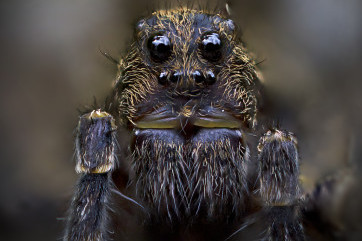 Look into my eyes! by Adam Walters