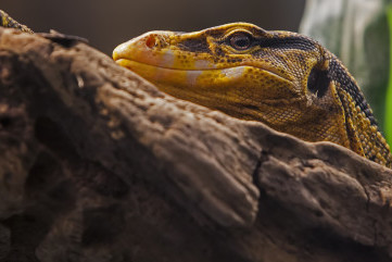 I can see you by Angelo Defensor