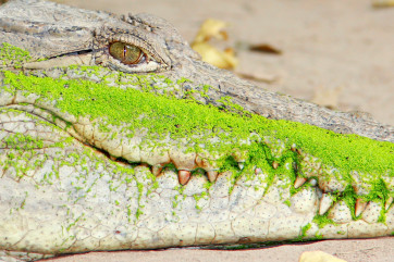 Green smile by Goran Erfani