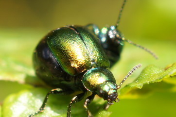 The Shining by Emma Furniss