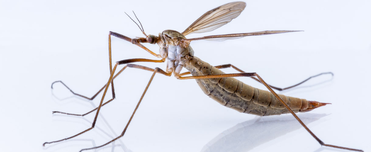 Winner - Creepy Crawling Critters Photo Competition