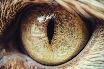 The beautiful eye of my cat Mephistopheles! by Aaron Thomas