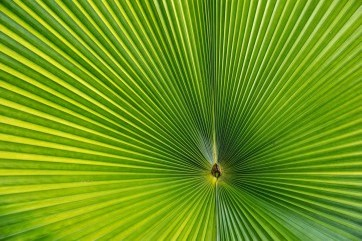 Eye of the Leaf by George Warner