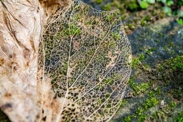 A leaf By Dario Migliaresi