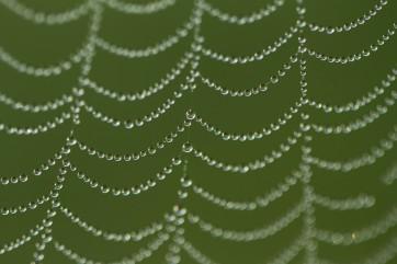 Morning dew drops By Melisa Aikenhead