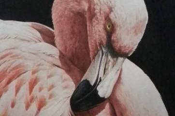 Flamingo study by Alan Woollett