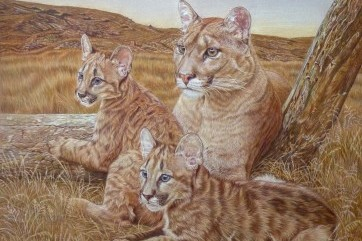 """""""Puma family"""" by France Bauduin"""