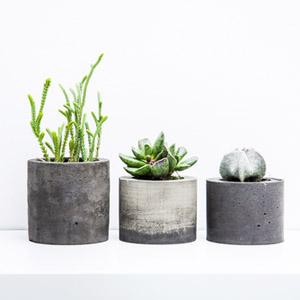 Cactus Household Plant