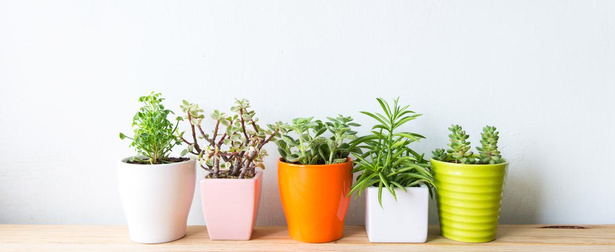 Best Low Maintenance Household Plants