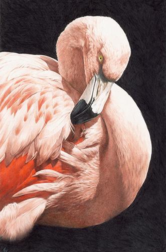 flamingo 2 lo res