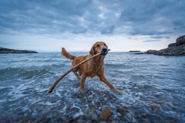 Skye having fun in Limeslade Bay, Gower Peninsula by Jeffery Moreau
