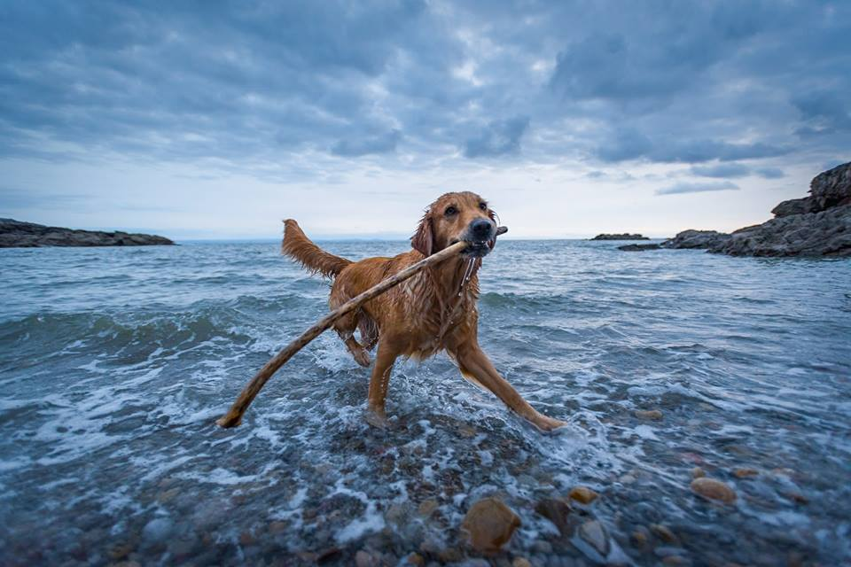 Winner -  It's A Dog's World Photo Competition