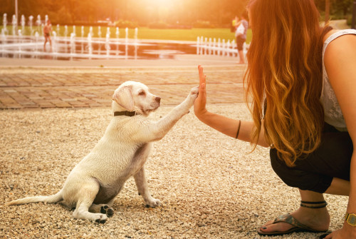 puppy_highfiving_girl