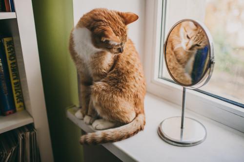 ginger_cat_on_windowsill