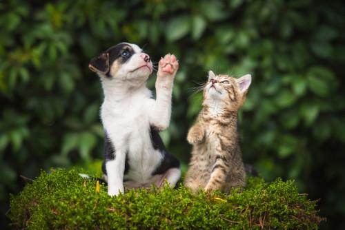puppy_and_kitten_on_bush