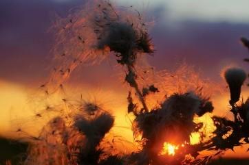 Thistledown sunset