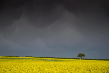 April showers above yellow fields