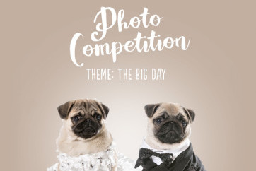 The big day competition