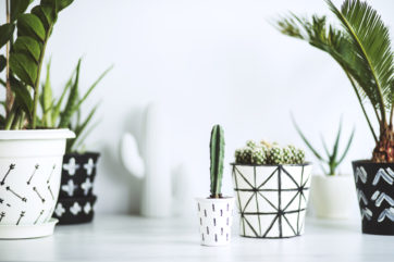 Indoor plants potted in geometric patterned pots