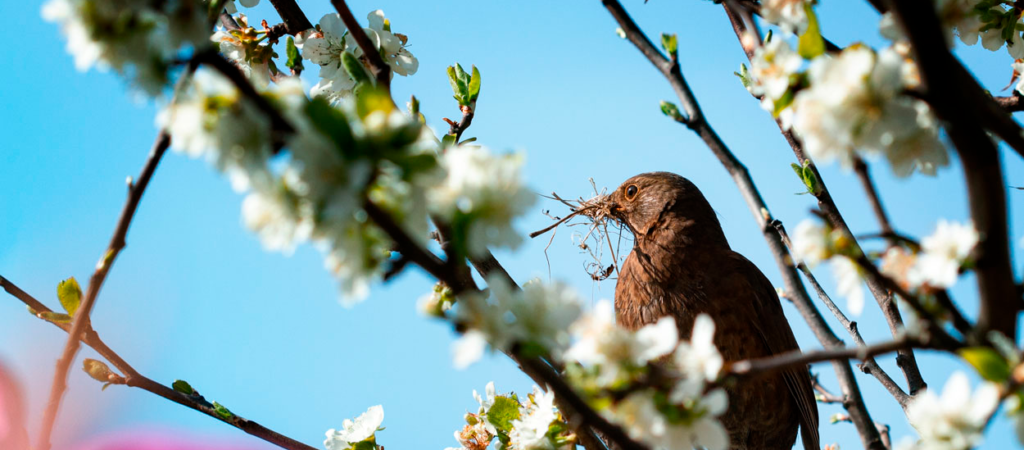 WINNER - SIGNS OF SPRING - PHOTO COMPETITION